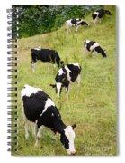 Holstein Cattle Spiral Notebook