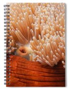 Home Of The Clown Fish 3 Spiral Notebook