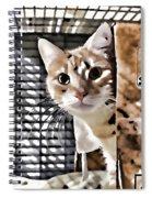 Homeless Cat Spiral Notebook