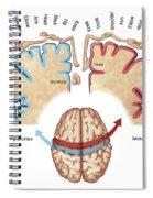 Homunculus Map Spiral Notebook