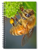 Honeybee Spiral Notebook