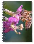 Honey Bee On Goji Berry Flower Spiral Notebook