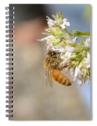 Honey Bee On Herb Flowers Spiral Notebook