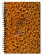 Honey Bee On Sunflower Spiral Notebook