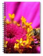 Honey Bee Pollinating Zinnia Spiral Notebook