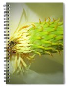 Honey Bees And Magnolia Three Spiral Notebook