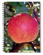 Honey Crisp Solo Spiral Notebook