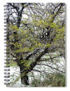 Honey Locust Tree On A Spring Snow Day Spiral Notebook