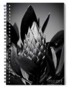 Honey Pot King Sugar Bush Protea Spiral Notebook