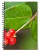 Honey Suckle Berry Seeds Spiral Notebook