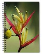 Honeyeater On Bird Of Paradise Spiral Notebook