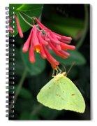 Honeysuckle Delight Spiral Notebook