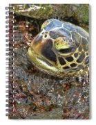 Honu In The Water Spiral Notebook