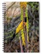 Hooded Oriole V1834 Spiral Notebook