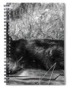 Hook Spiral Notebook