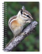 Hopi Chipmunk Spiral Notebook