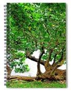 Horizontal Trunk Spiral Notebook