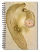 Horn Plantain, 1585 Spiral Notebook