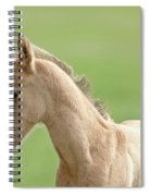 Horse And Colt Spiral Notebook