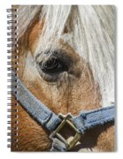 Horse Close Up Spiral Notebook