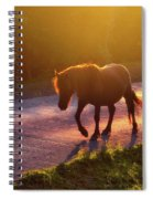 Horse Crossing The Road At Sunset Spiral Notebook