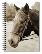 Horse Face Spiral Notebook
