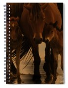 Horse Family  Spiral Notebook
