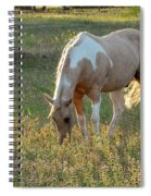 Horse Feeding In Grass Farm With Sunset Light From The Left Spiral Notebook