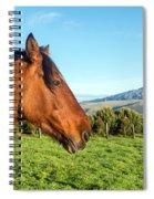 Horse Head Closeup Spiral Notebook