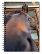 Horse Hello Spiral Notebook