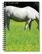Horse In A Field Of Flowers Spiral Notebook