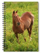 Horse In A Field With Flowers Spiral Notebook