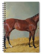 Horse In A Stable Spiral Notebook