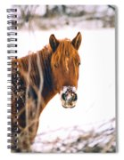 Horse In Winter Spiral Notebook