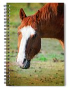 Horse Look Spiral Notebook