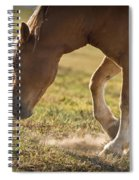 Horse Pawing In Pasture Spiral Notebook