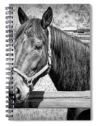 Horse Portrait In Black And White Spiral Notebook