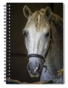 Horse Portrait Spiral Notebook