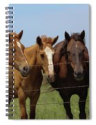 Horse Quartet Spiral Notebook