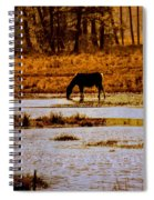 Horse Silhouetted Spiral Notebook
