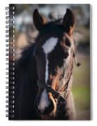 Horse Whispering Spiral Notebook