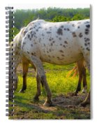 Horses And Buttercups Spiral Notebook