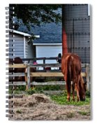 Horses Grazing Spiral Notebook