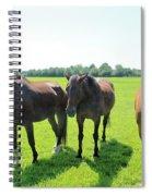 Horses In Bridgehampton Spiral Notebook
