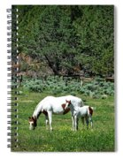 Horses In Meadow - California Spiral Notebook