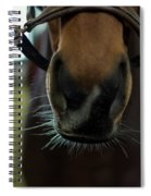 Horse Whiskers Spiral Notebook