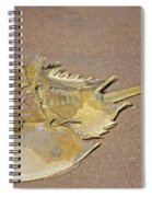 Horseshoe Crab Spiral Notebook