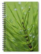 Horsetail With Dew Spiral Notebook
