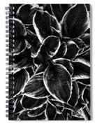 Hosta In Black And White Spiral Notebook
