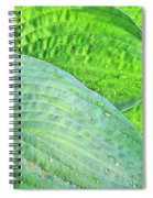Hosta Lavista Baby Spiral Notebook
